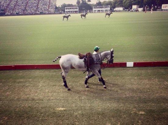 Campo Argentino de Polo: photo2.jpg