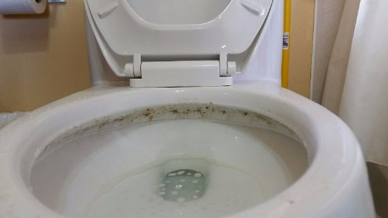 Nice ring of mold around the toilet seat.... - Picture of East Point ...