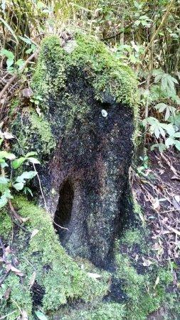 Nordøya, New Zealand: snuffalupagus
