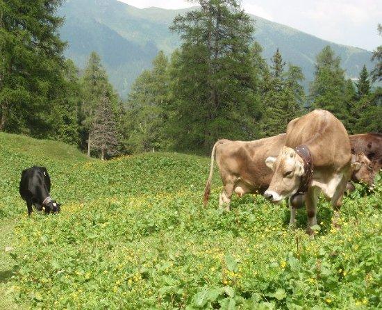 Breguzzo, Italië: Gli animali della Malga