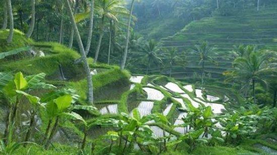 Kerobokan, Indonésie : Bali Island