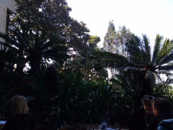The Restaurant at the Art Gallery of NSW: Outdoor area of Cafe with fern garden.