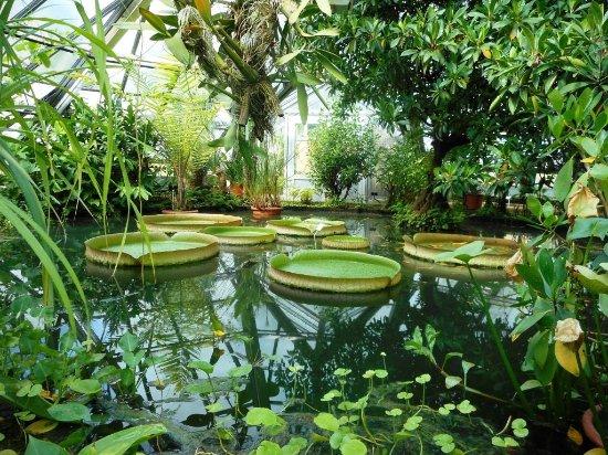 Victoria Picture Of Botanischer Garten Halle Saale Tripadvisor
