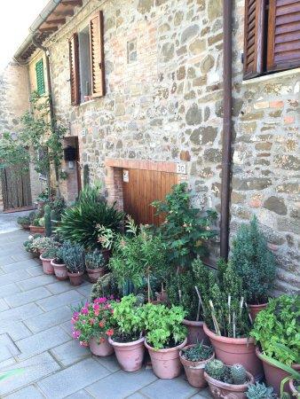 Montalcino 564