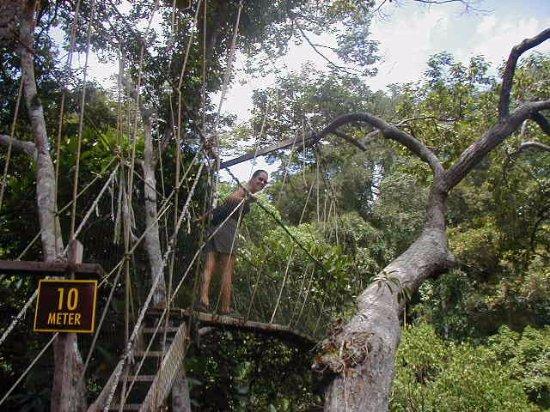 Taman Negara National Park, มาเลเซีย: canopy walk