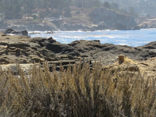Pacific Grove Oceanview Boulevard: little farther south @ point Lobos