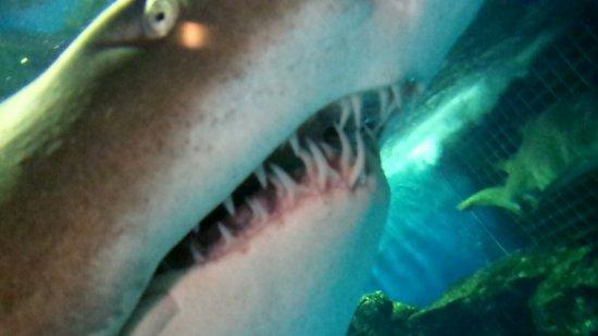 Shinagawa Aquarium: 20160910_123931902_large.jpg