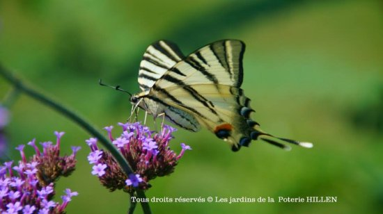 Hautes-Pyrenees, Francia: été