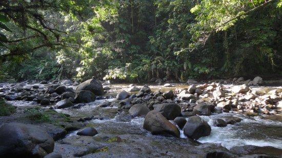 Парк Национальный, Гваделупа: rivière dans laquelle se jette la cascade