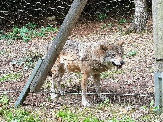 Wolfspark