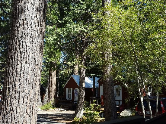 Tahoma, Californië: Loved our stay here at the beautiful, peaceful, rustic B and B with a very yummy breakfast!!