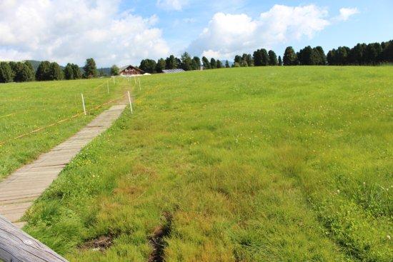 Villandro, Itália: Weg zur Rinderhütte