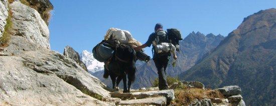 Mount Trails