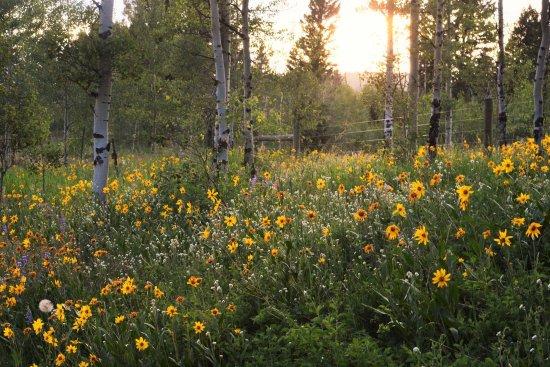 Brandin' Iron Inn: Wild Flowers surround our area