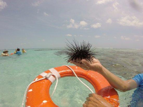 Bilde fra Belize Cayes