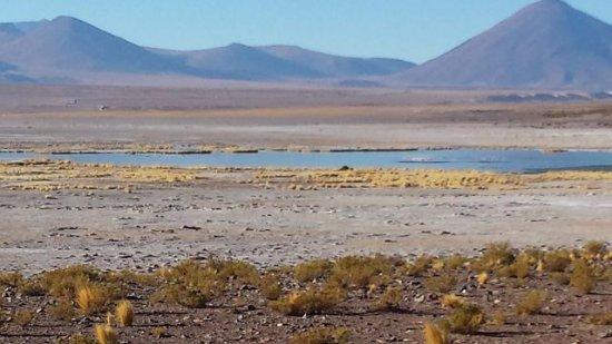 Pica, شيلي: Vista a la laguna del Salar, en el centro se aprecian los flamencos de color Rosados