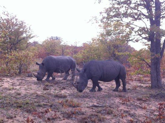 Gambar Klaserie Private Game Reserve