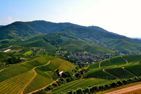 Weingut Schloss Staufenberg