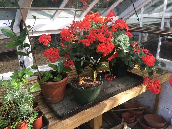 Bramber, UK: In the greenhouse