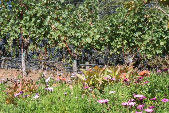Angwin, CA: The fruit