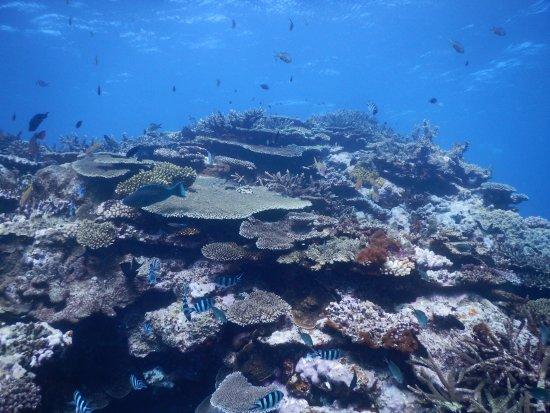 Poindimie, Nueva Caledonia: Great hard coral diversity