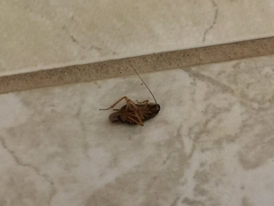Lifetime of Vacations Resort at Grand Lake: Roaches killed by guest, kept coming out while cooking
