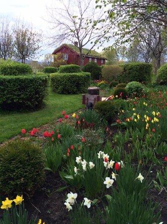 Sør-Trøndelag, Norveç: Our garden