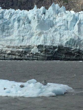 Gustavus, AK: Ice calved off Marjorie glacier