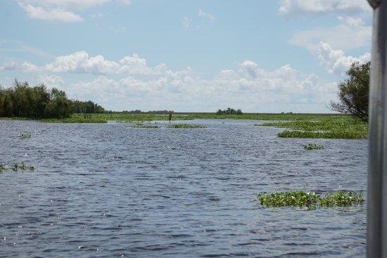 Westwego, หลุยเซียน่า: Swamp Tour