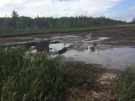 Lunenburg, Kanada: View of the drained swamp