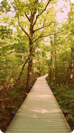 Theodore Roosevelt Island Park
