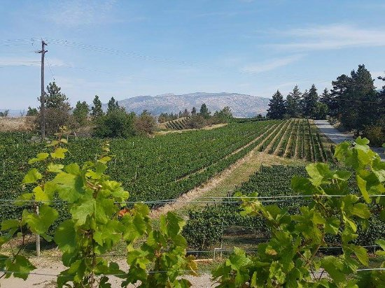 Wine Your Way Tours: On the way into Crushpad Winery, Summerland, BC