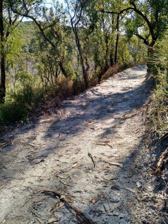 North Stradbroke Island, Austrália: Walking path at Blue Lake National Park