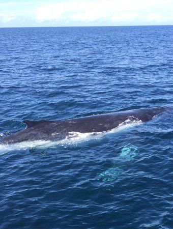 Blue Bay Whale Watching Photo