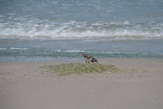 Padre Island National Seashore: Great bird watching!