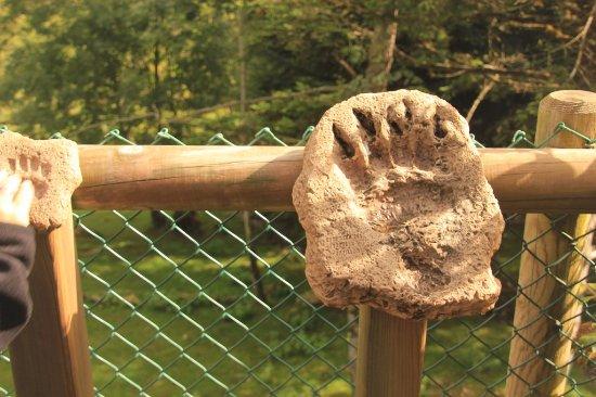 Aran Park: La pezuña o pata de un oso.