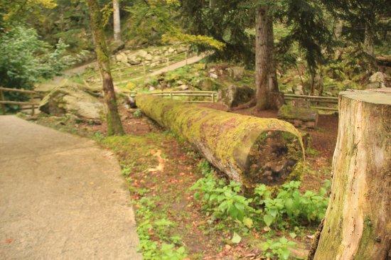 Aran Park: Paisajes de dentro del bosque o parque