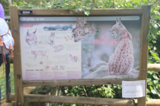 Aran Park: Uno de los animales del parque