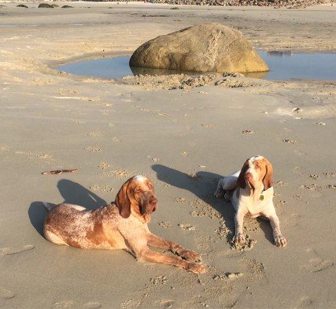 Kerfissien Beach