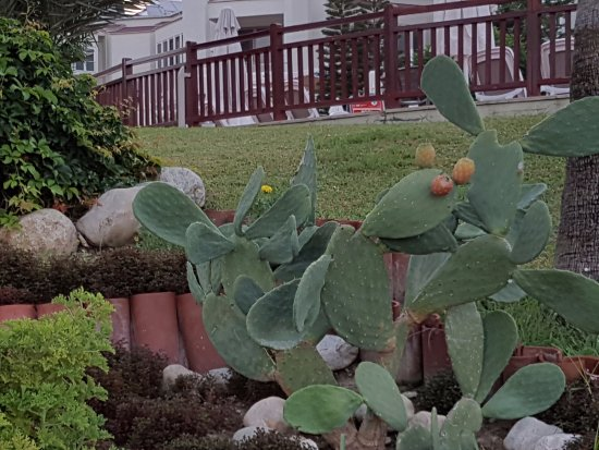 Les plantes exotiques du jardin sentido perissia side for Les plantes du jardin