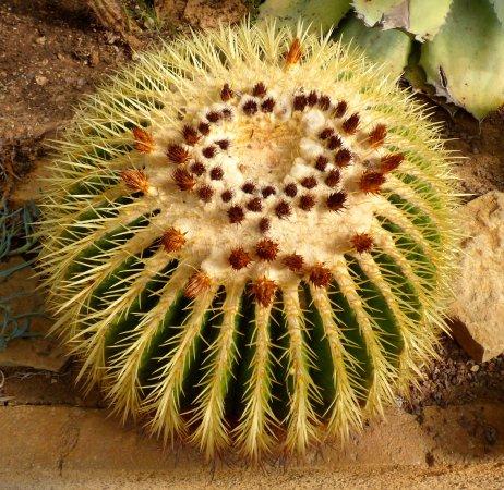 cactus picture of zoa parc animalier et exotique sanary sur mer tripadvisor. Black Bedroom Furniture Sets. Home Design Ideas