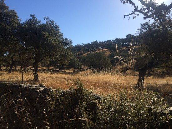 Encinasola, Ισπανία: Barrancos (Portugal), senderos, y zonas de húmedas de rivera con alcornoques