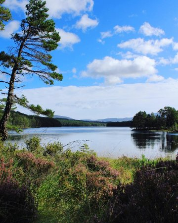 Aviemore, UK: Image taken from the tip of the loch.