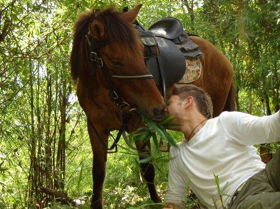 Thai Horse Farm
