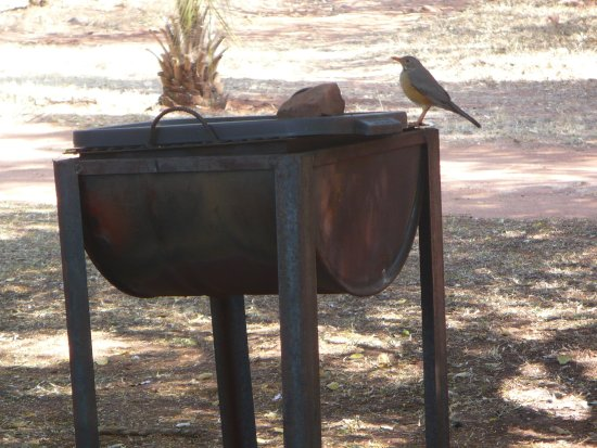 Modimolle (Nylstroom), جنوب أفريقيا: Beautiful bird life around the campsites, in the large shady trees and bushveld