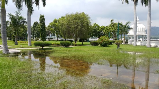 Nehru Park: Palm trees
