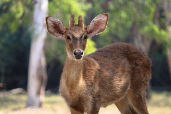 Nehru Zoological Park: animals in nehru zoo park
