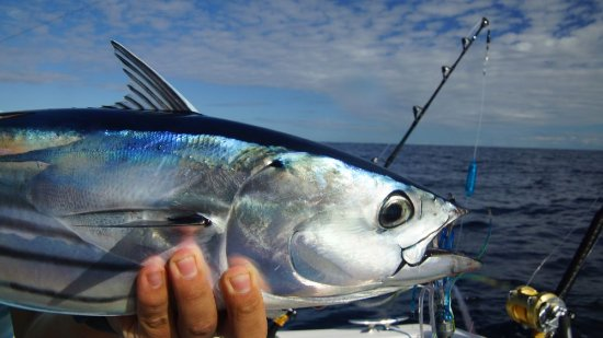 Reel Pursuit Offshore Fishing Charters