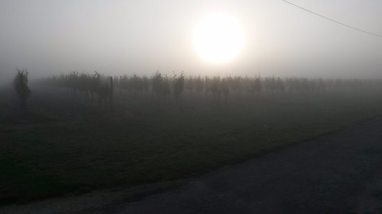Rauzan, Francia: Sunrise over Vineyard