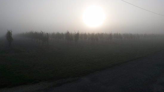 Rauzan, Frankrike: Sunrise over Vineyard